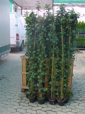 sicherheit mit container pflanzen denn erfolg ist. Black Bedroom Furniture Sets. Home Design Ideas